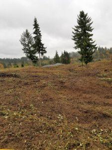 Brush clearing in Woodland Washington