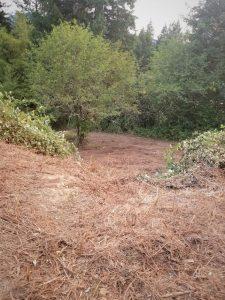 Land clearing in Clark County Washington