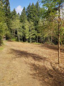 Brush clearing in Clark County WA